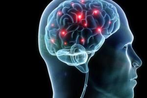 synapseinbrain
